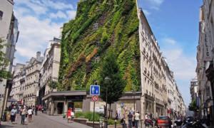 Begrünte-Fassade-extensiv-Bepflanzung-Wohnhaus-Paris-Installation