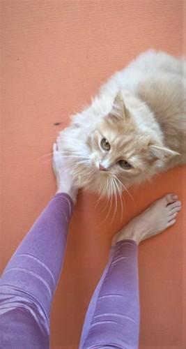 34. Tipp: Sich mit Haustieren beschäftigen (c) Yvonne Waldner